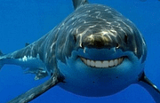 Dentistry Practice Profitability: Be a Dental Shark!