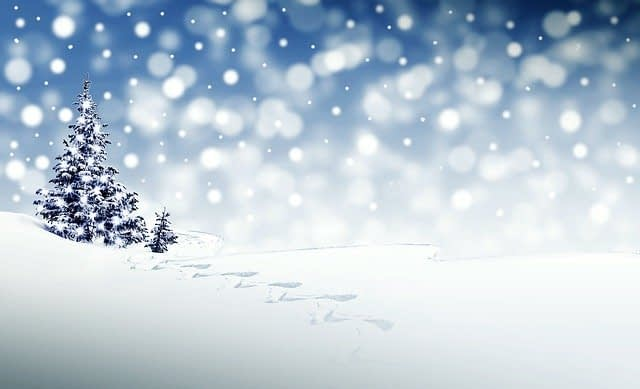 snow with falling in a field with an evergreen tree in december